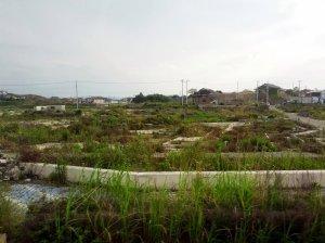 day4_tsunami2